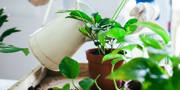 office plant service the woodlands tx